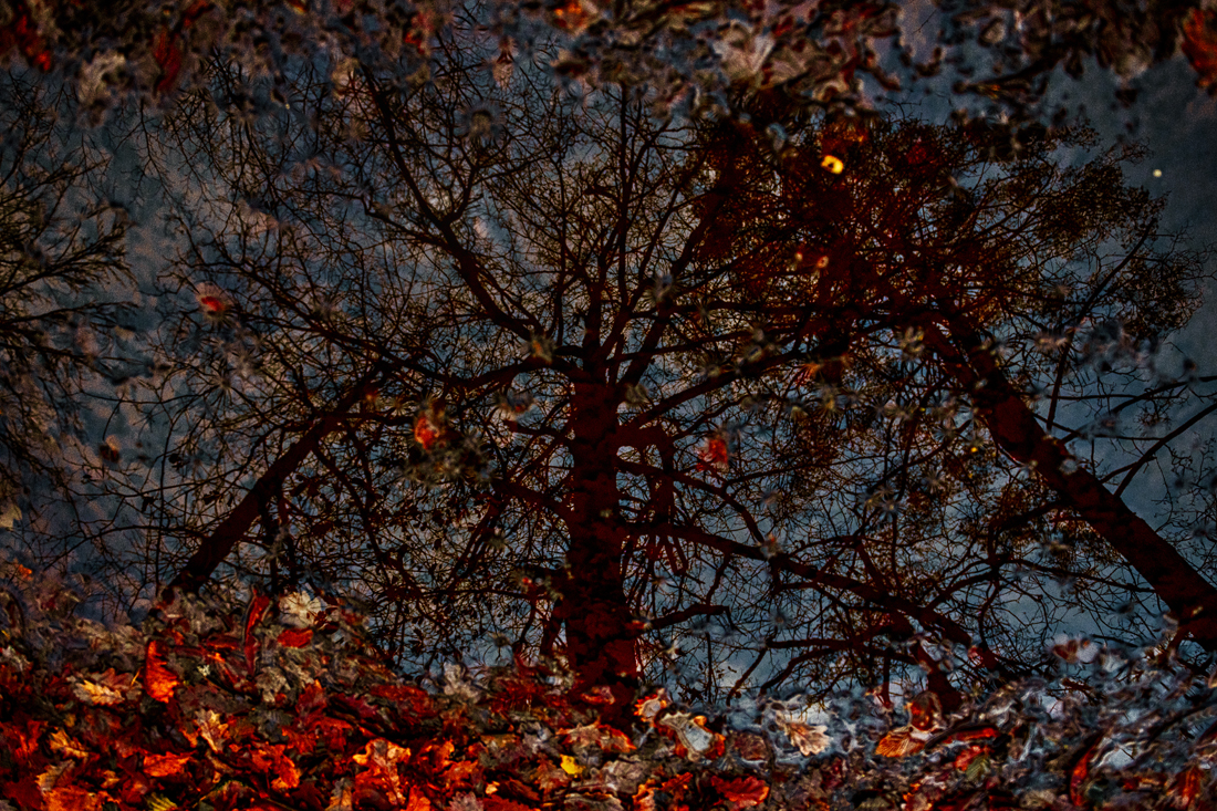 Nature Abstraction 2497.jpg
