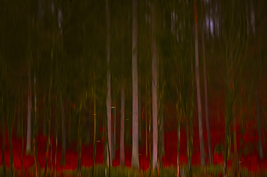 Nature Abstraction 2730.jpg