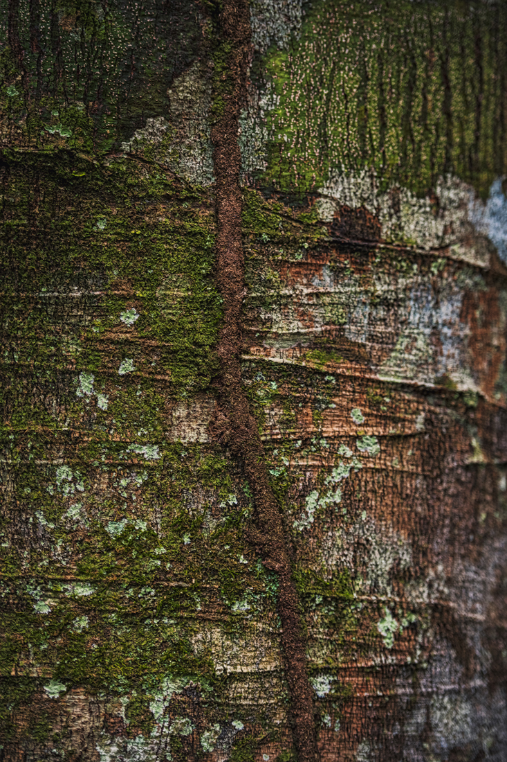 Nature Abstraction 0651.jpg