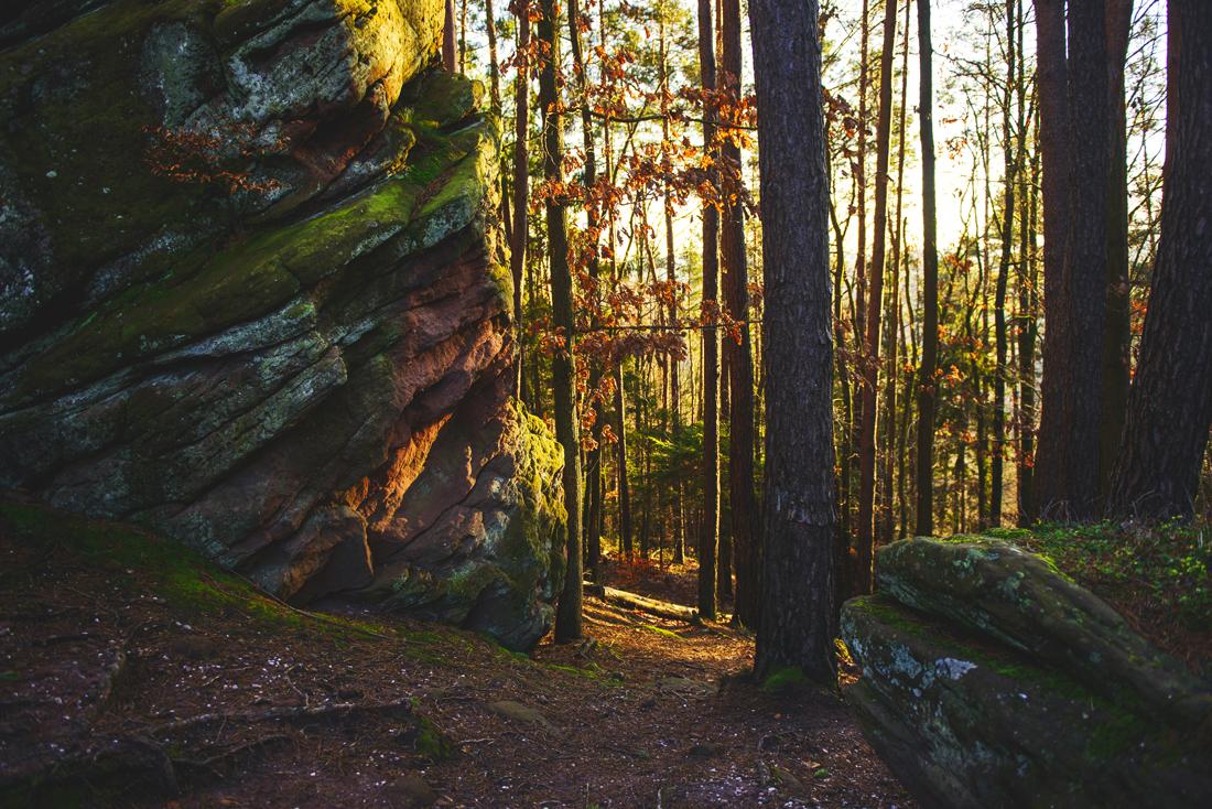 German Forest _9291.jpg