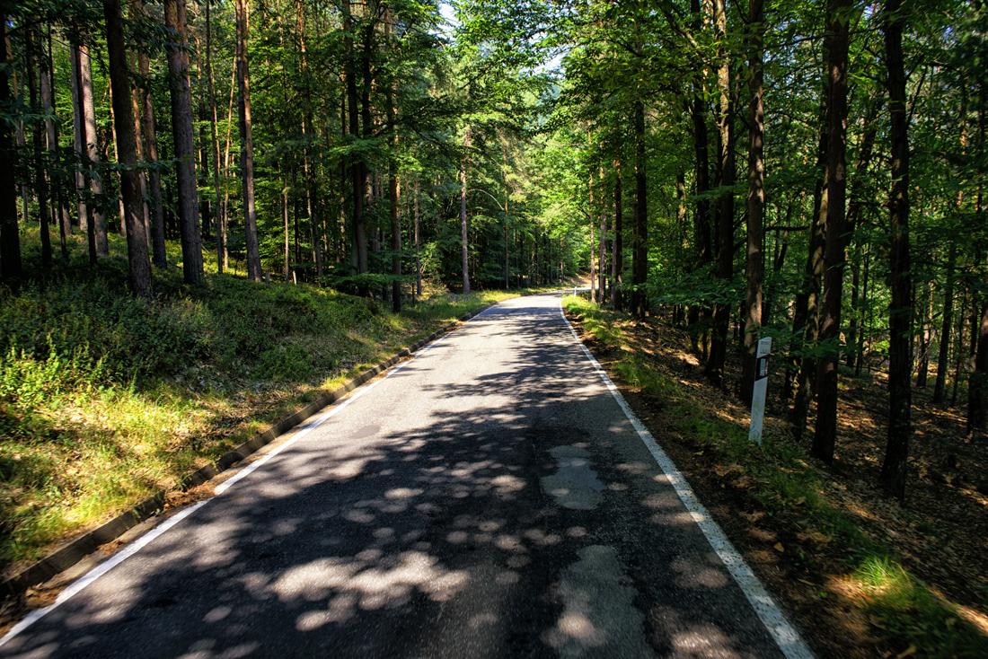 German Forest 130815 1051.jpg