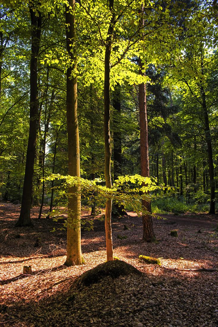 German Forest 130815 0939.jpg