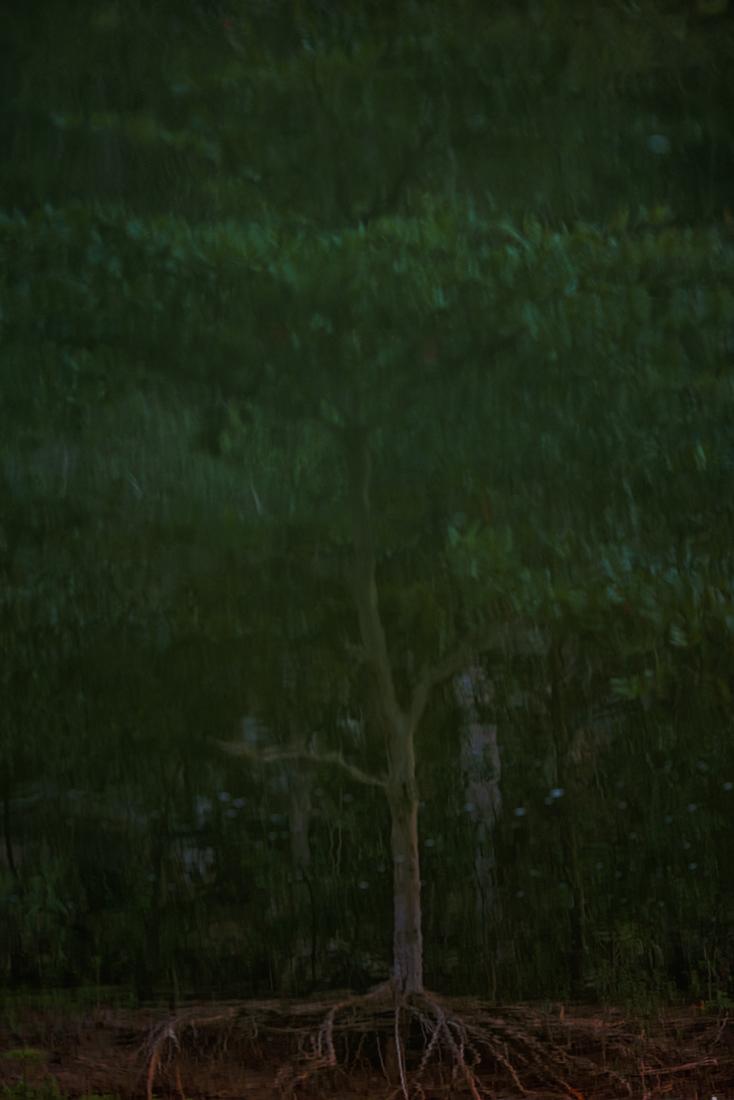 Tree_8224.jpg