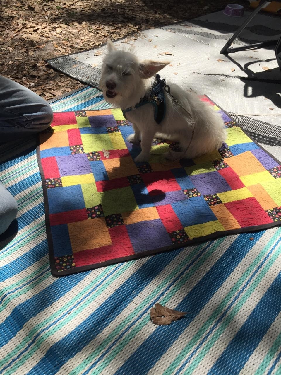 "Here is our friends adopted dog - Daisy Mae enjoying her hand-me-down blanket. It was originally an ""oops"" quilt my mom did that turned into our dogs quilt and then over time got passed on to Daisy Mae. As you can see she is one happy pup to not only have a blanket, but a loving ""fur""ever home!"