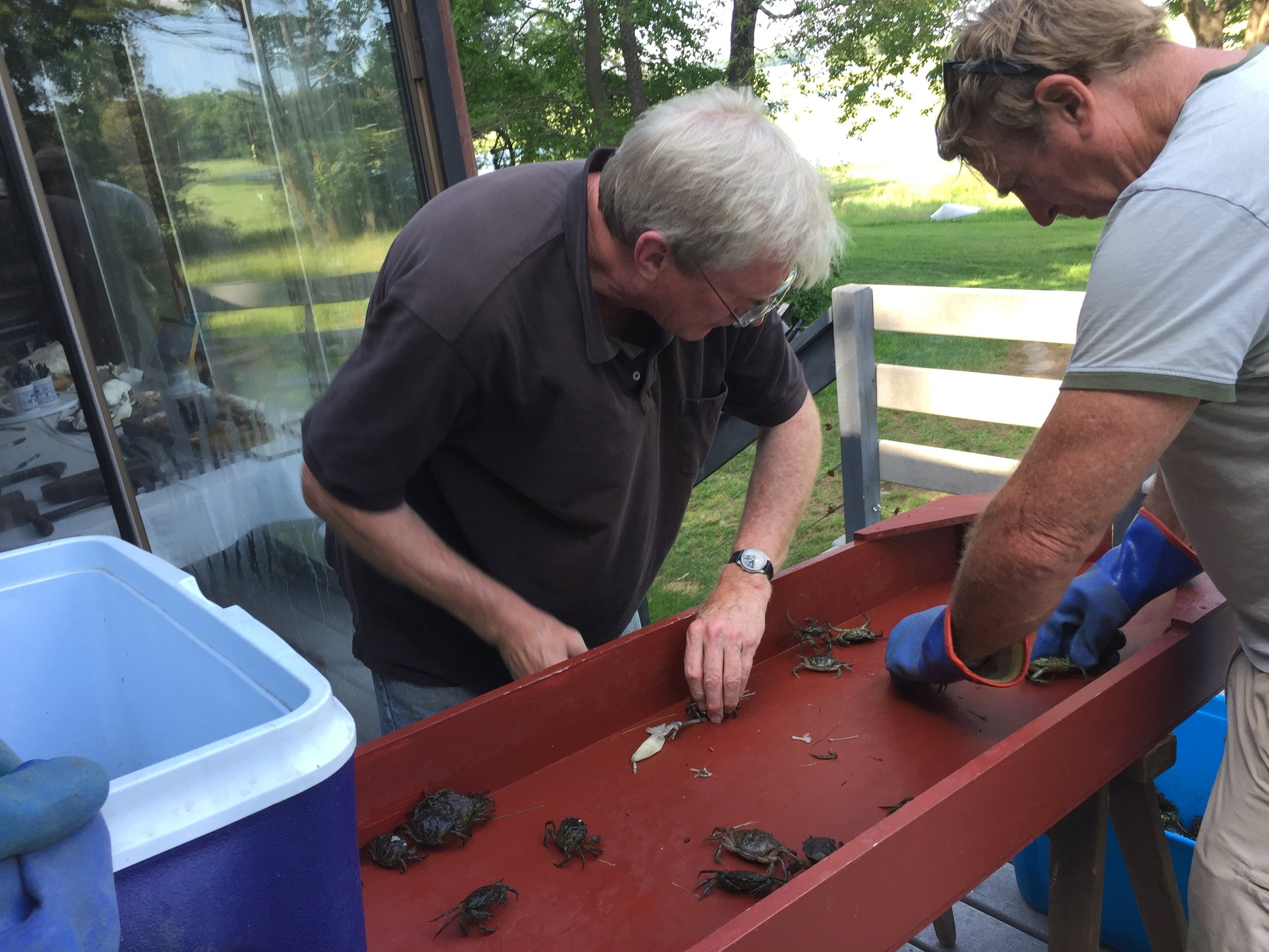 Roger sorts crabs with Peter Phippen, coastal coordinator of the Upper North Shore region of the Massachusetts Bay National Estuary Project