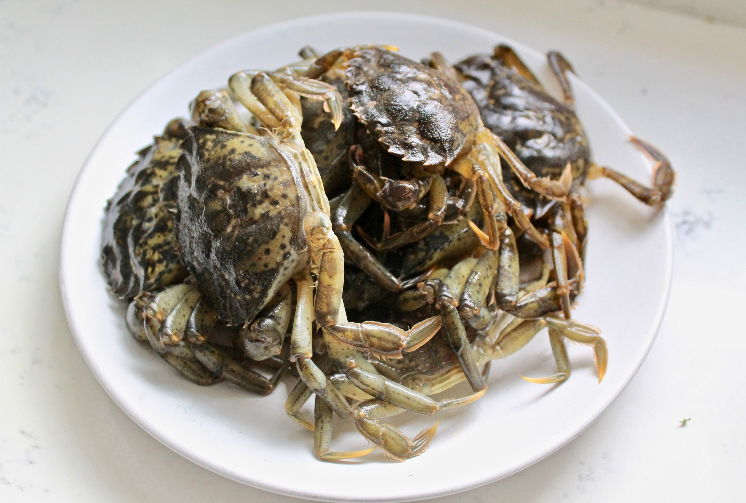 Freezing, Thawing, & Trimming Soft-Shell Green Crab - With Greenpoint Fish & Lobster