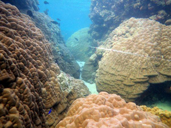 Large Porites lutea colonies in the lagoon around Yacata Island. Photo ©Sangeeta Mangubhai/WCS.