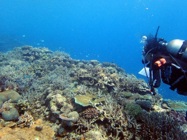 Sangeeta Mangubhai documenting the different genera of coral found in the northern Lau group. Photo ©Steven Lee.