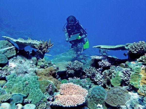 Steven Lee recording benthic cover on reefs in northern Lau. Photo ©Sangeeta Mangubhai/WCS.
