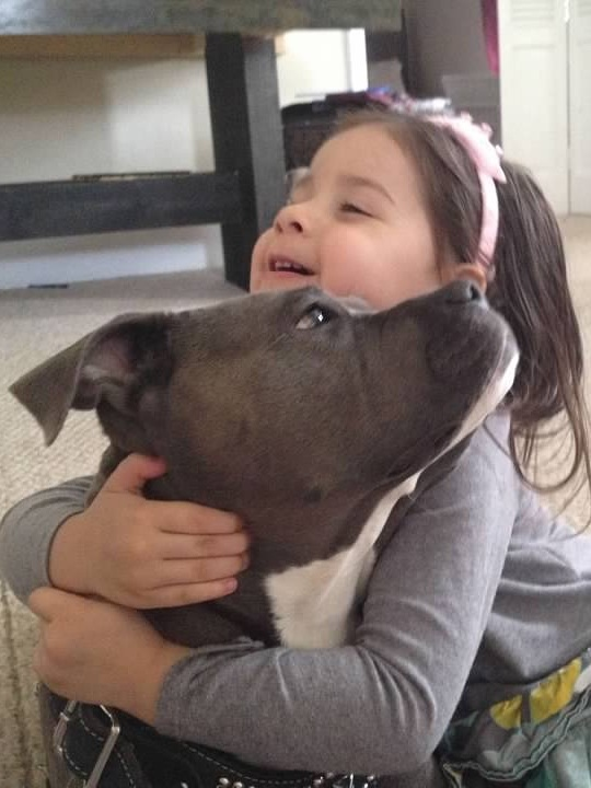 8 Facts About Pitbulls- Not Without My Coffee 3