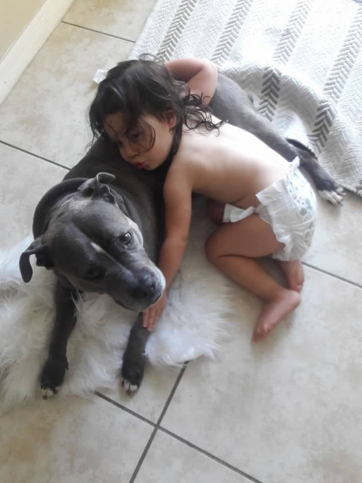 Not Without My Coffee- 8 Facts About Pitbulls 11