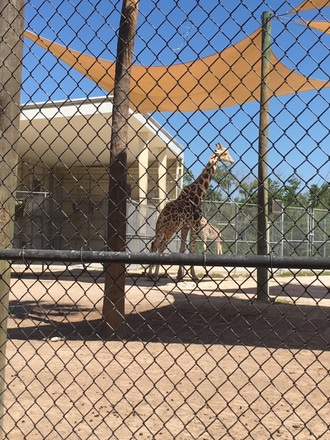 Not Without My Coffee- Naples Zoo 17.JPG
