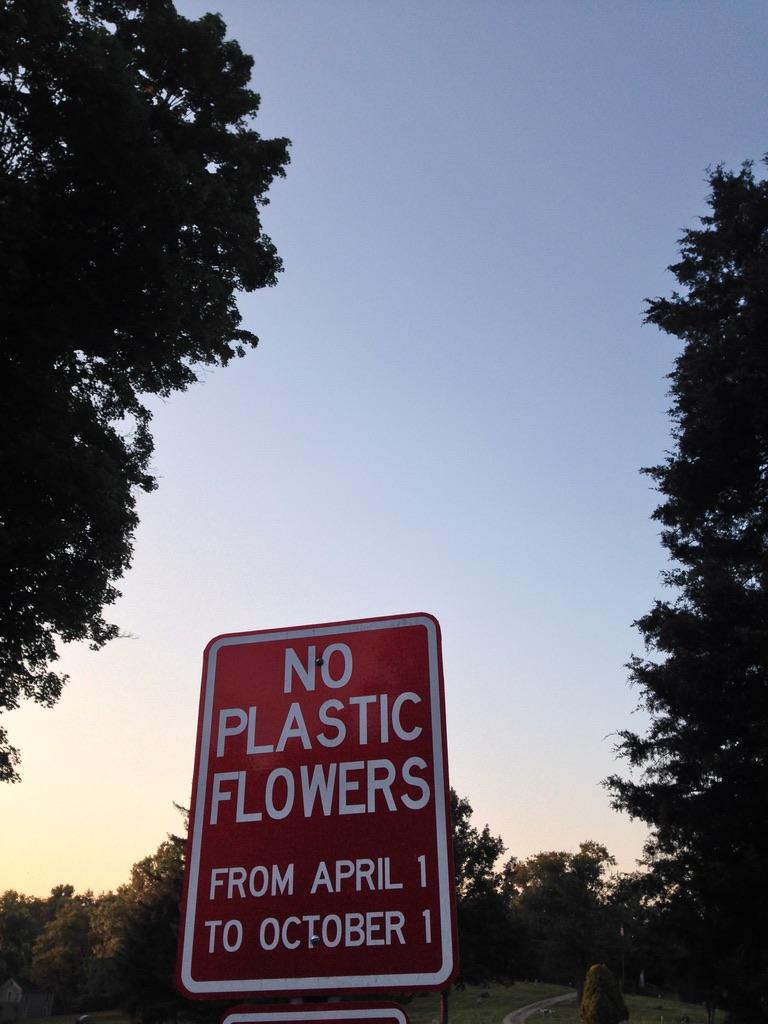 No Plastic Flowers.jpg