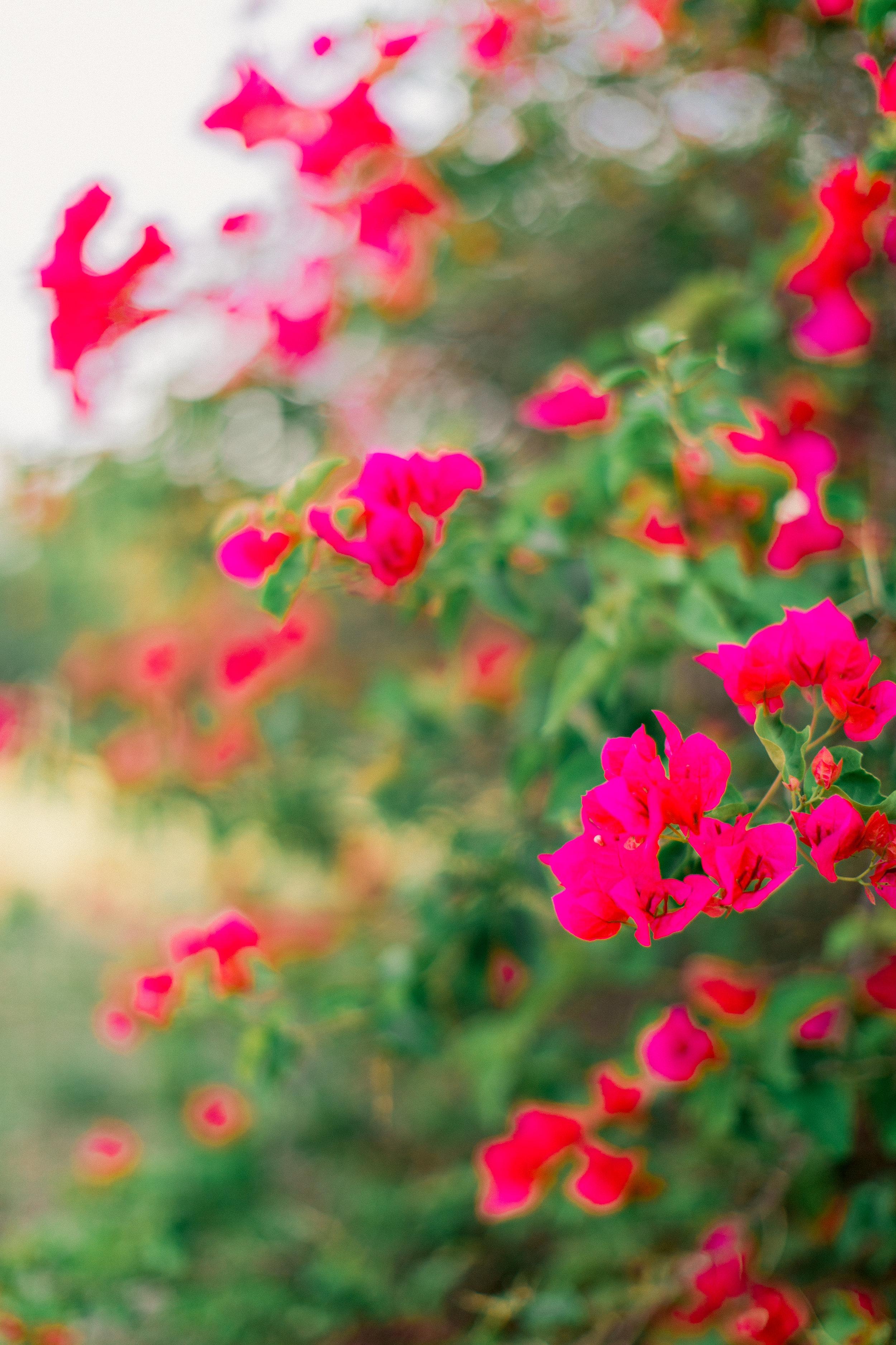 late_spring-4.jpg