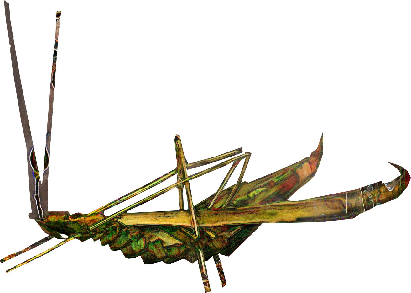 grasshopper .jpg