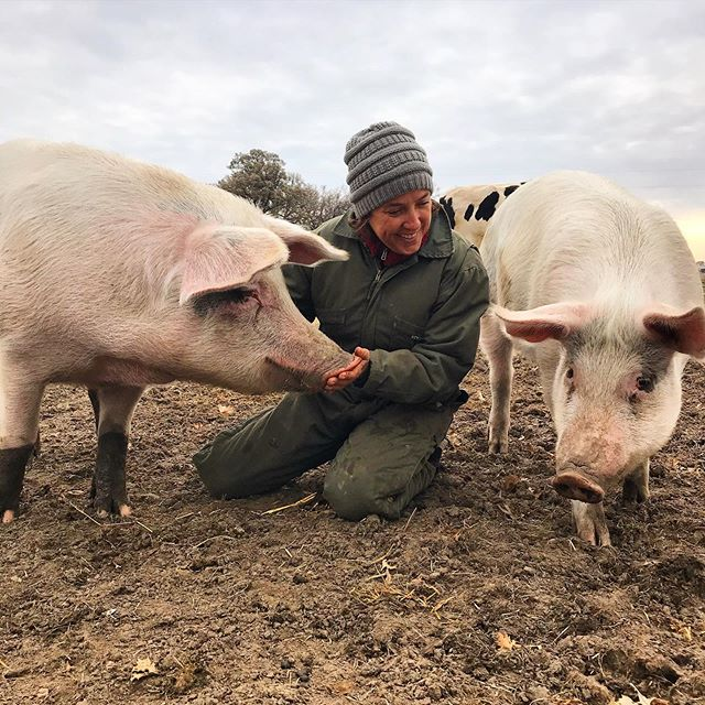 Happy and free—the way they should be—at @iowafarmsanctuary 🥰🐖♥️🌱 . #veganforthem #veganfortheanimals #friendsnotfood #pigs #pigsofinstagram #animalrights