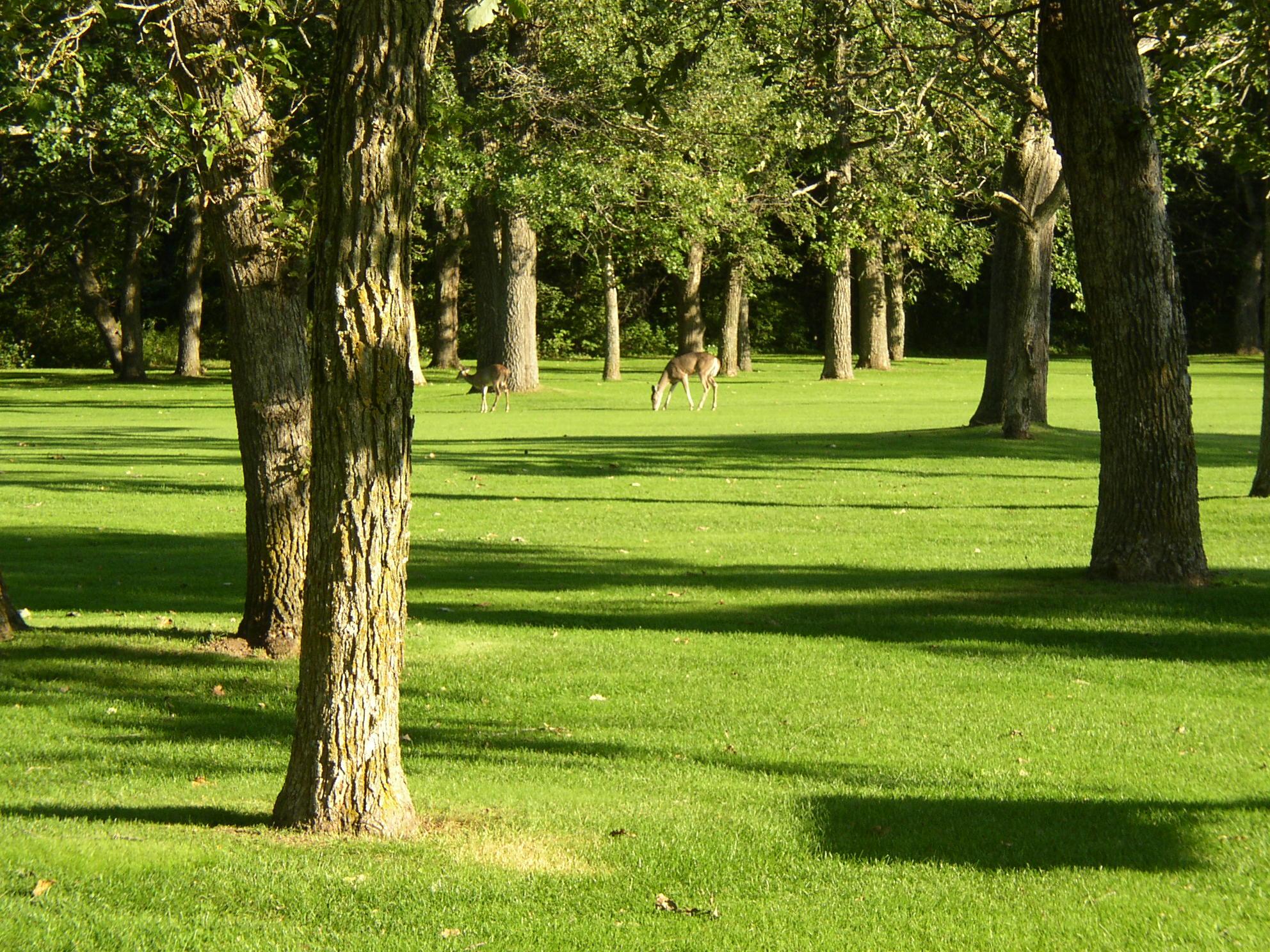 golf course 102.jpg