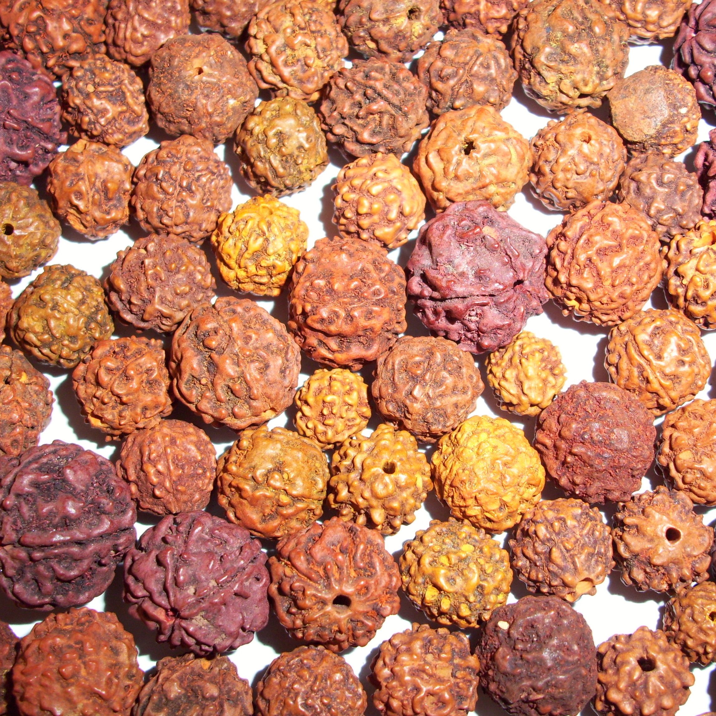Benefits of Rudraksha Beads Rudraksha Malla Titusville Yoga Loft at The Titusville Yoga Loft Downtown Titusville Yoga Studio, Yoga For Beginners, Hatha Yoga, Vinyasa Yoga, Ashtanga Yoga, Yin Yoga, Kids Yoga, Meditation, Barre, Titusville Yoga.jpeg