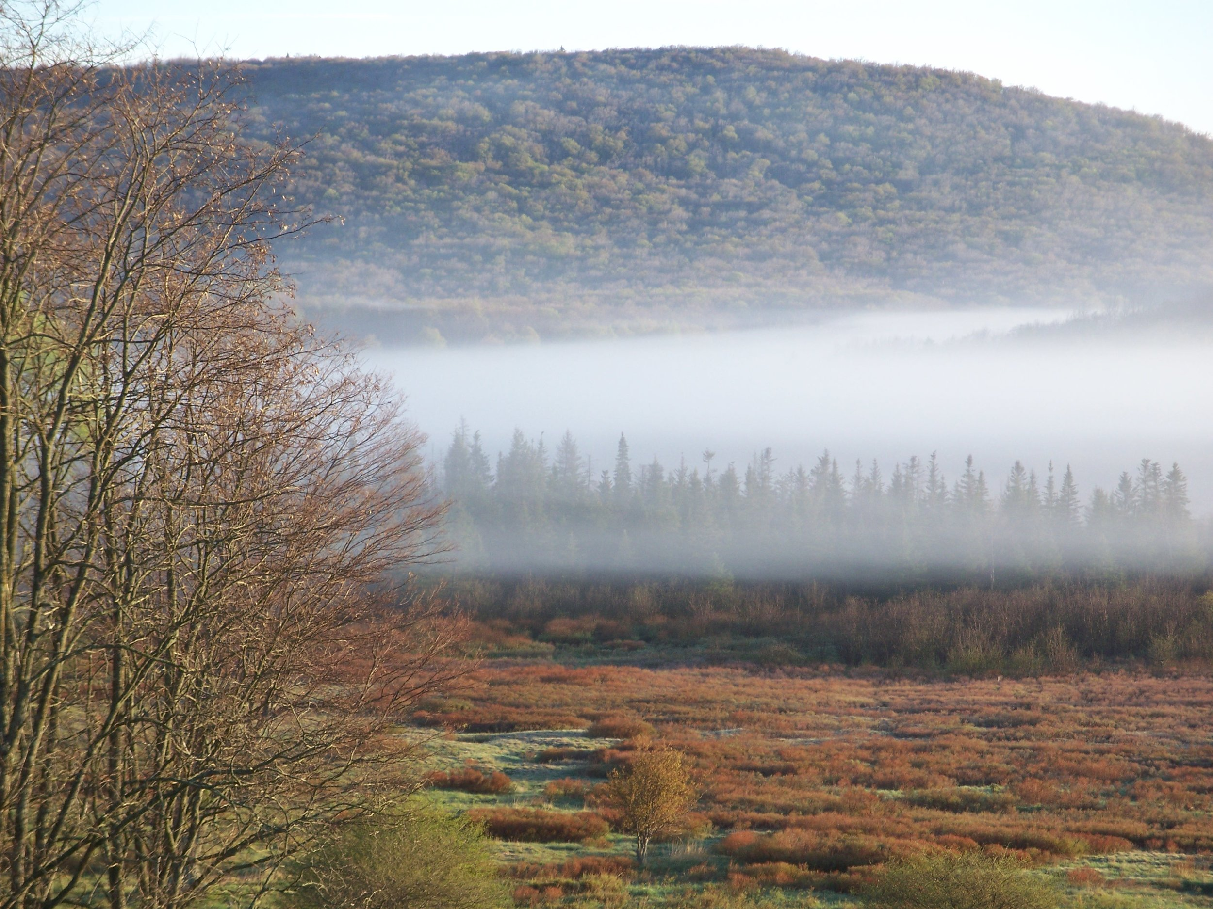 Canaan Valley near ALT - By Doug Wood