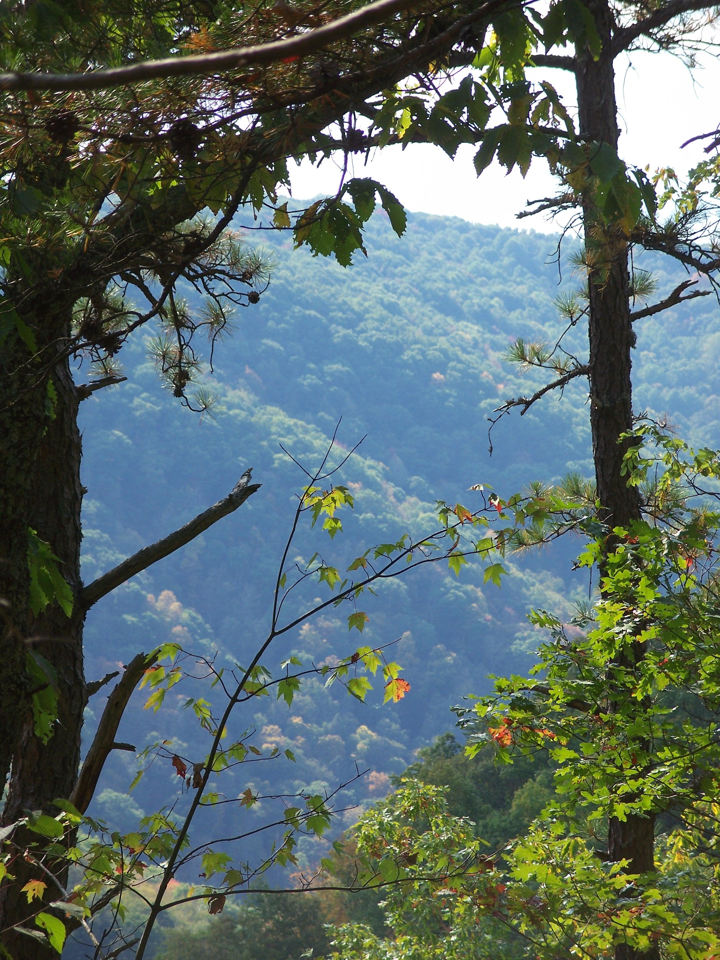 Descending into Beaver Creek Gorge - By Doug Wood