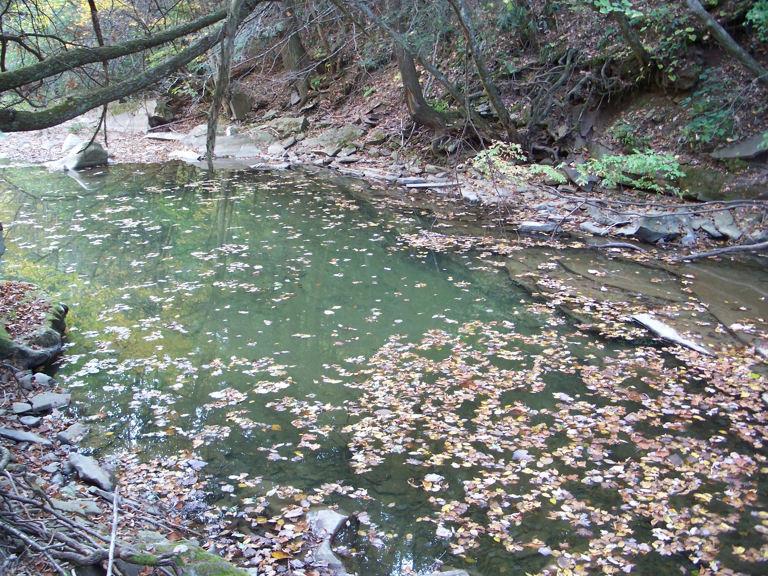S3 Beaver Ck swimming hole - By Doug Wood