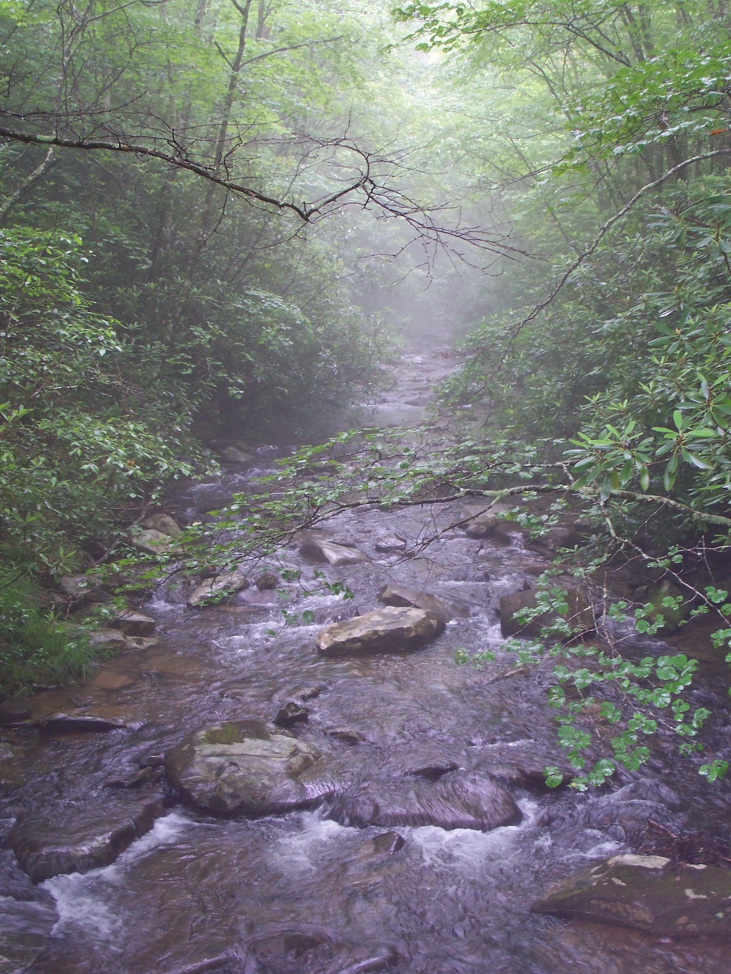 S4 Meadow Ck mist - By Doug Wood
