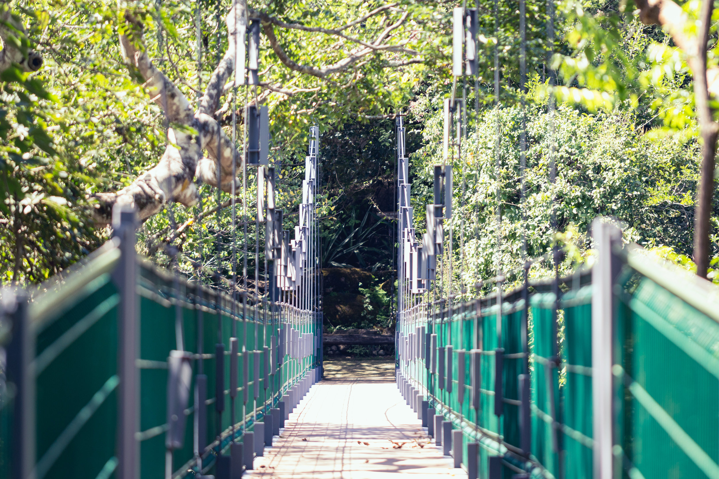 Hanging bridges at Rio Perdido