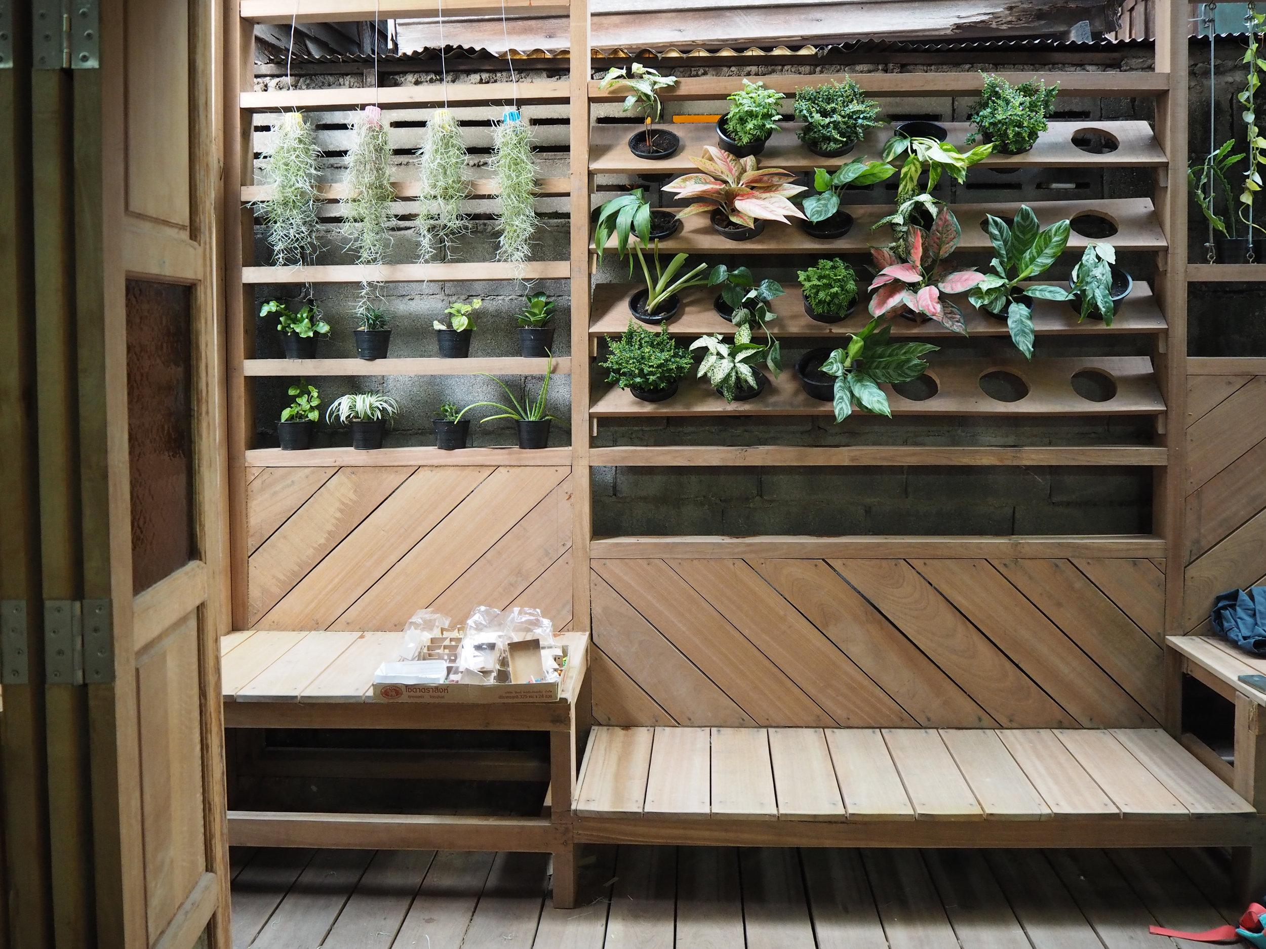 Dancing House: Renovating a community space in Nang Lerng, Bangkok Thailand - plants