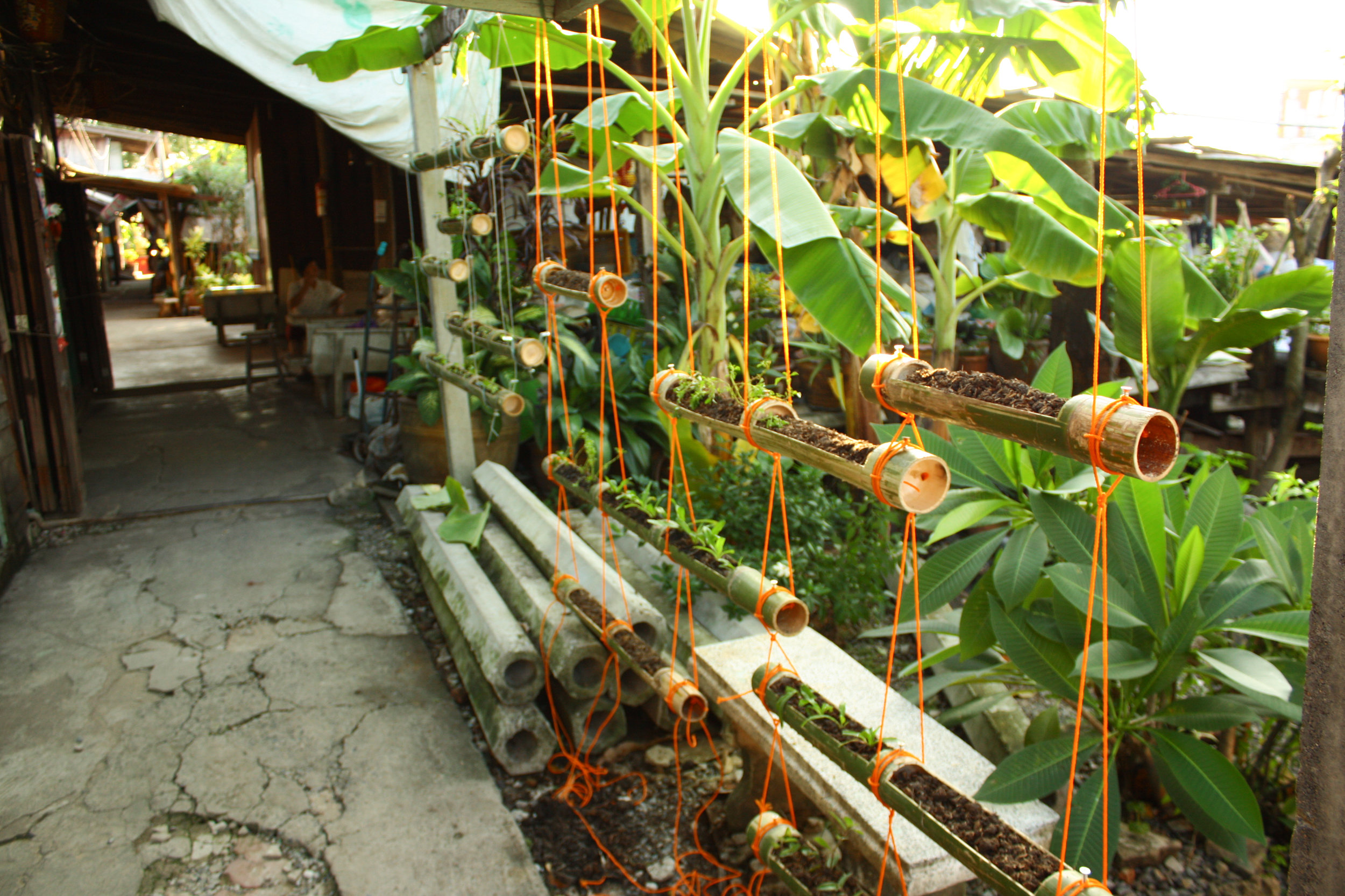 Community furniture Klong 3, Thailand: structure for a vertical garden and herb garden using bamboo