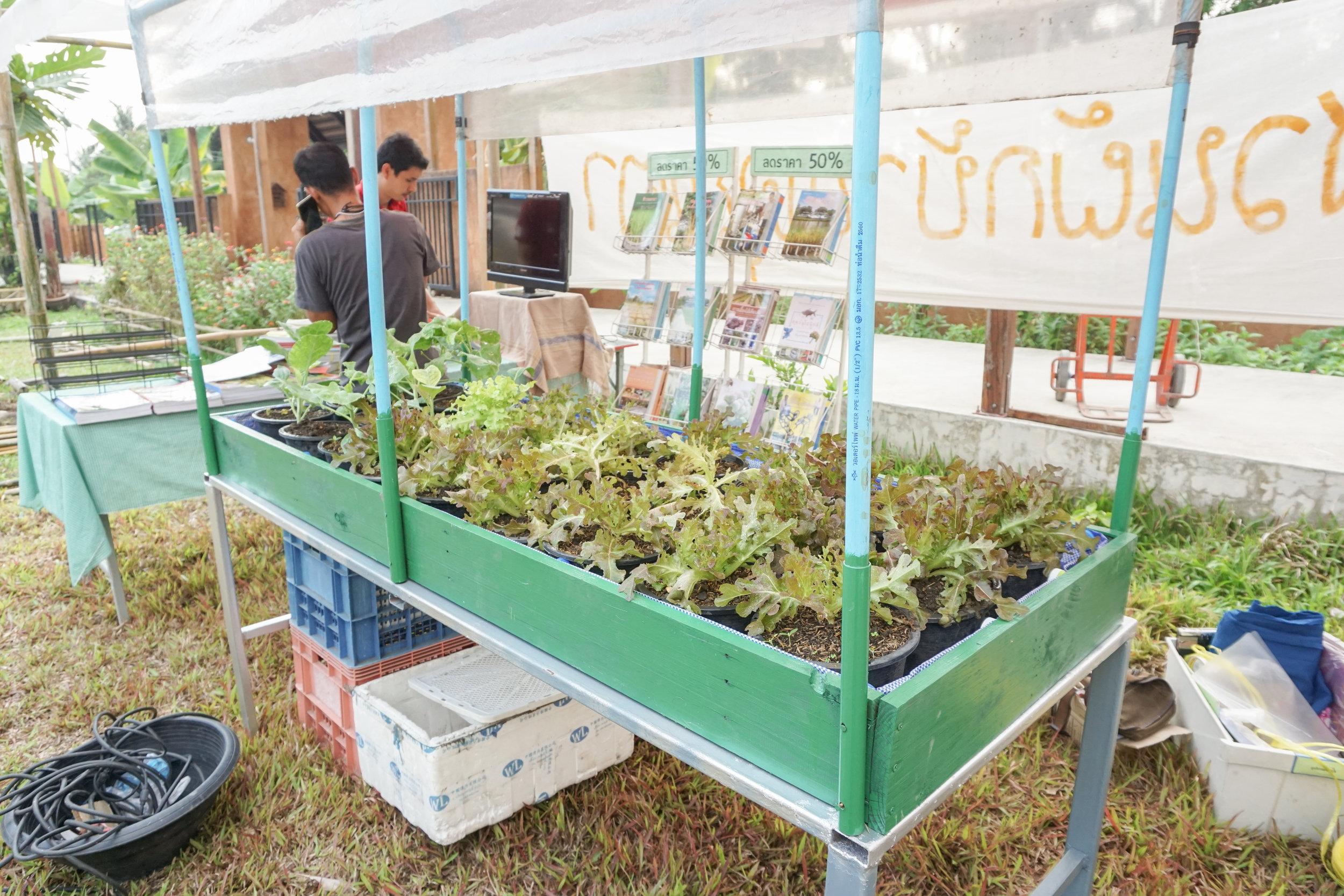 Organic produce at Thai City Farm Festival in Nonthaburi province