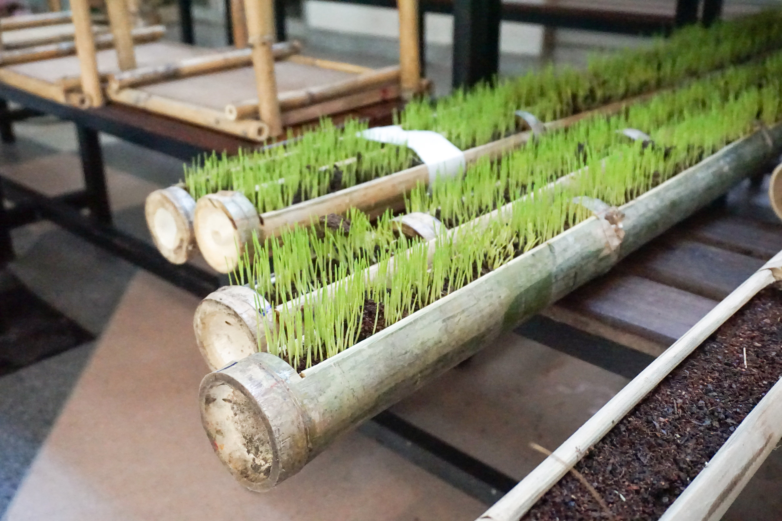 City Farming for a Sustainable City Event: Growing micro greens in bamboo