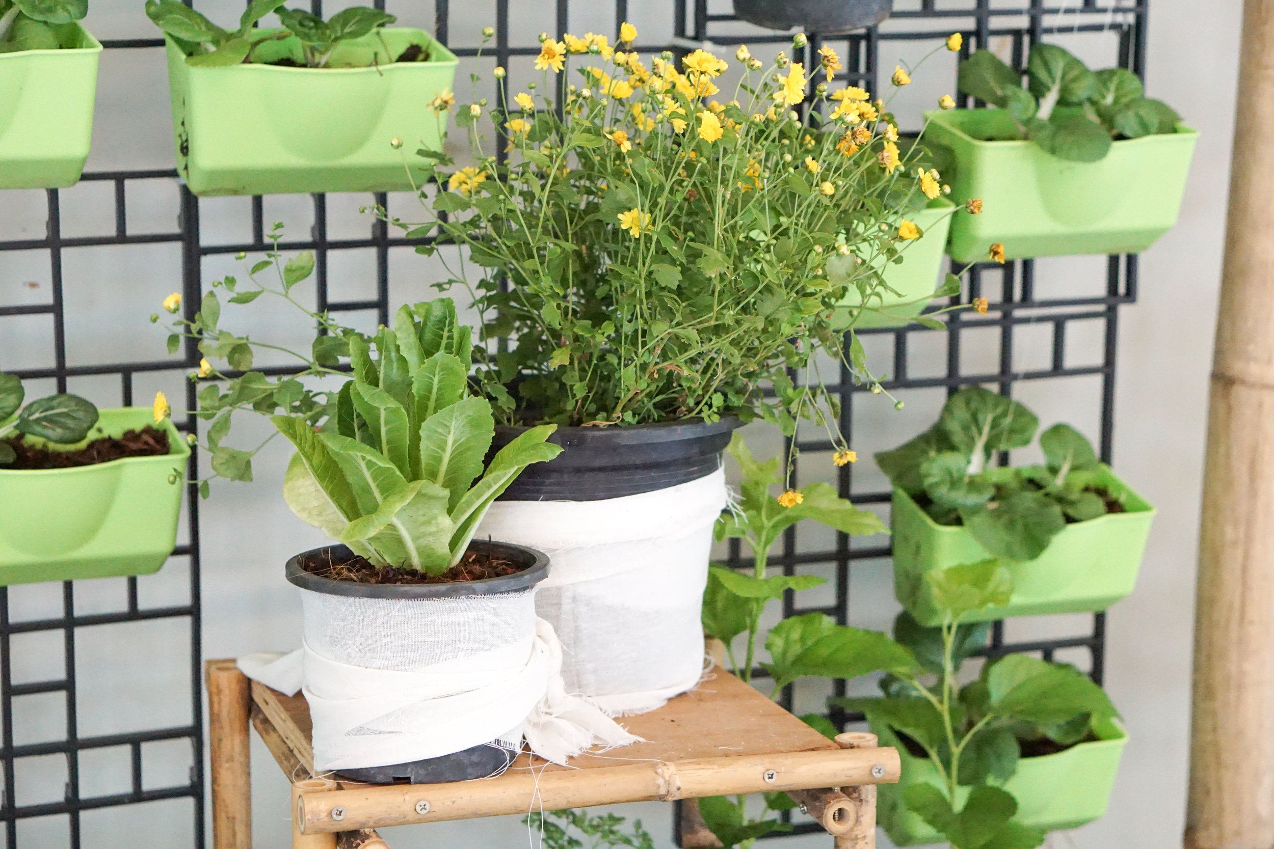 City Farming for a Sustainable City Event: Details from the photo corner with vertical garden