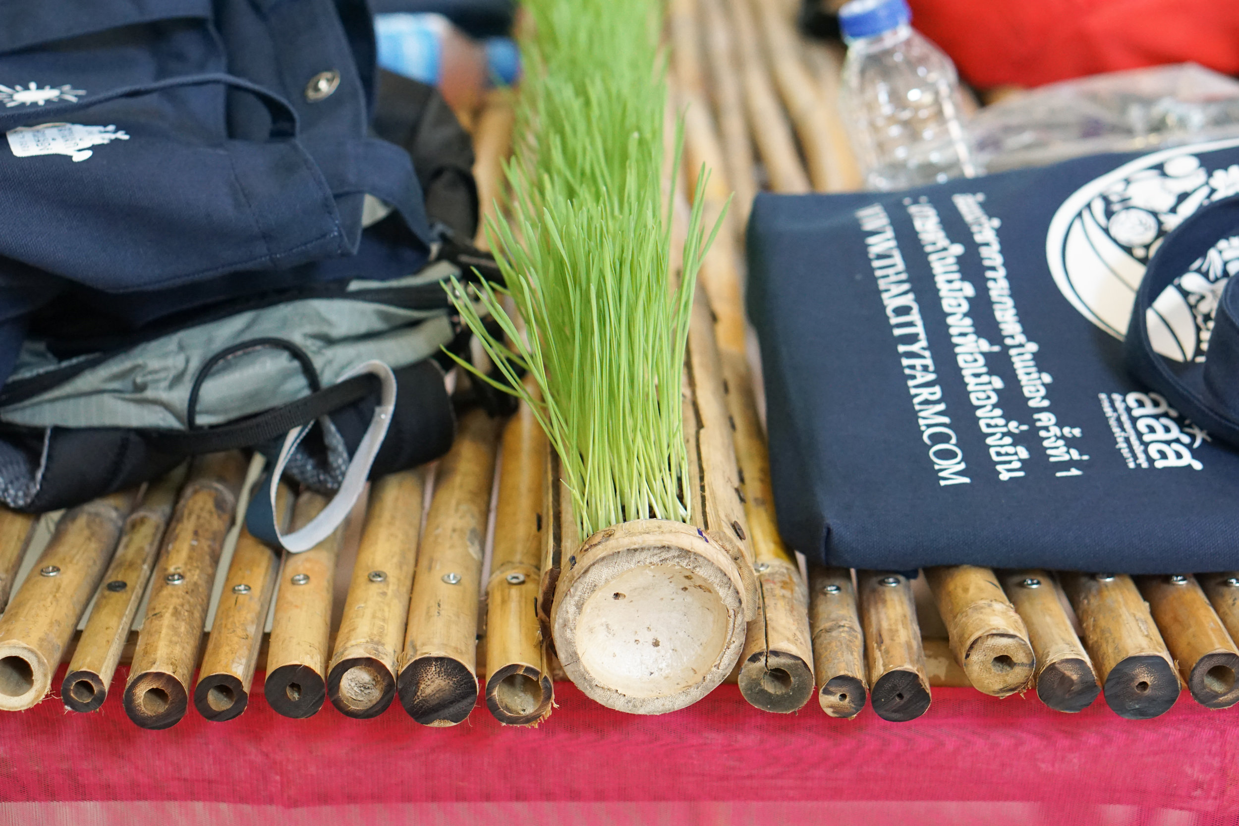 City Farming for a Sustainable City Event: Our big bamboo table with a roll of micro greens