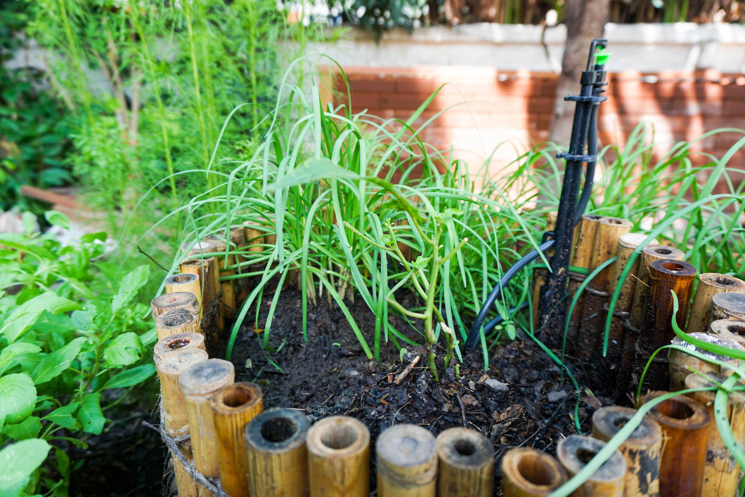Bo.lan Edible Garden: ZONE G - The Spiral Garden & Compost