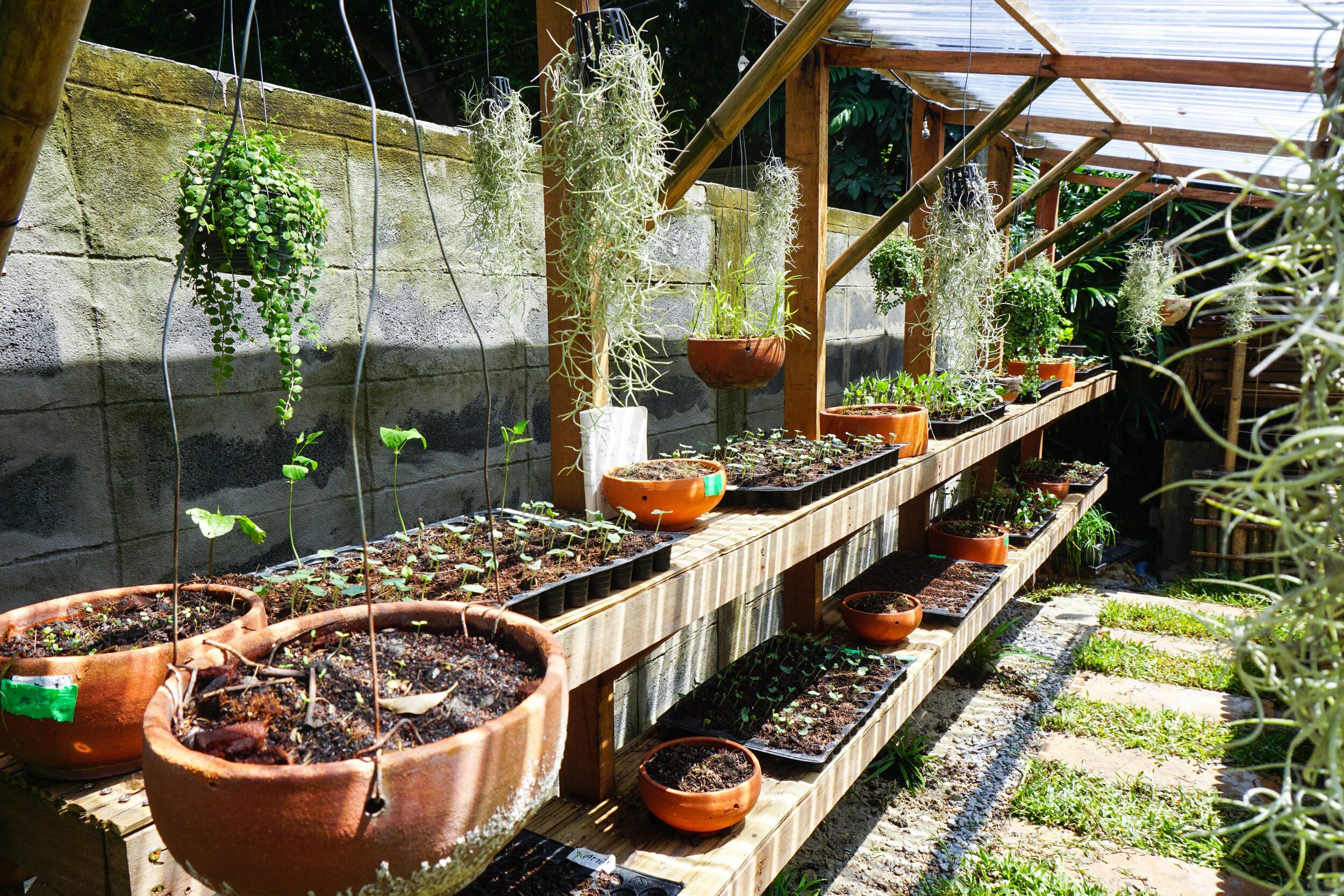 Bo.lan Edible Garden: Plant nursery in ZONE E - The Short-term Harvest Vegetable Garden