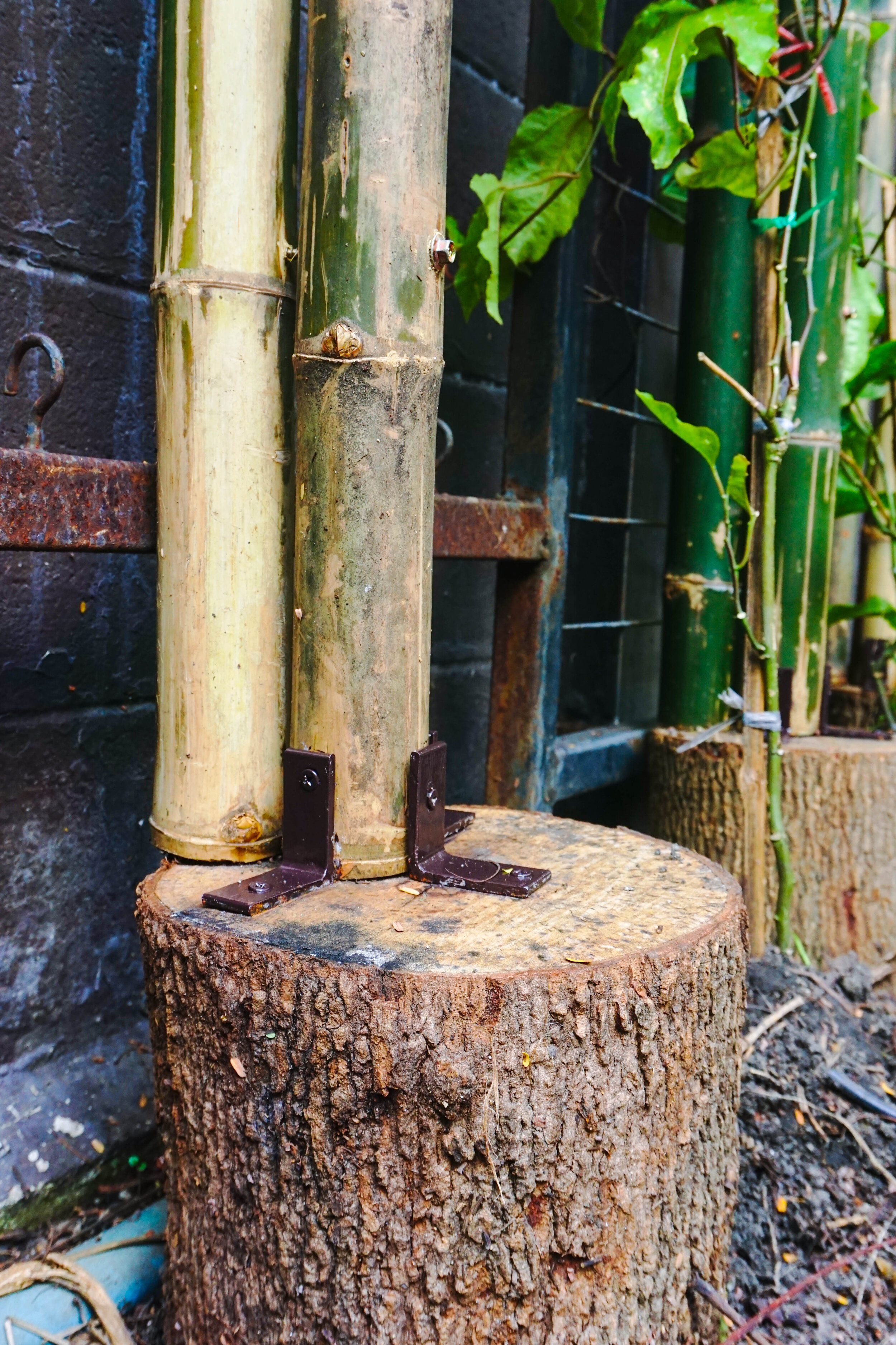 Bo.lan Edible Garden: ZONE H - The Fresh Air Tunnel built with bamboo and farmed tamarind logs