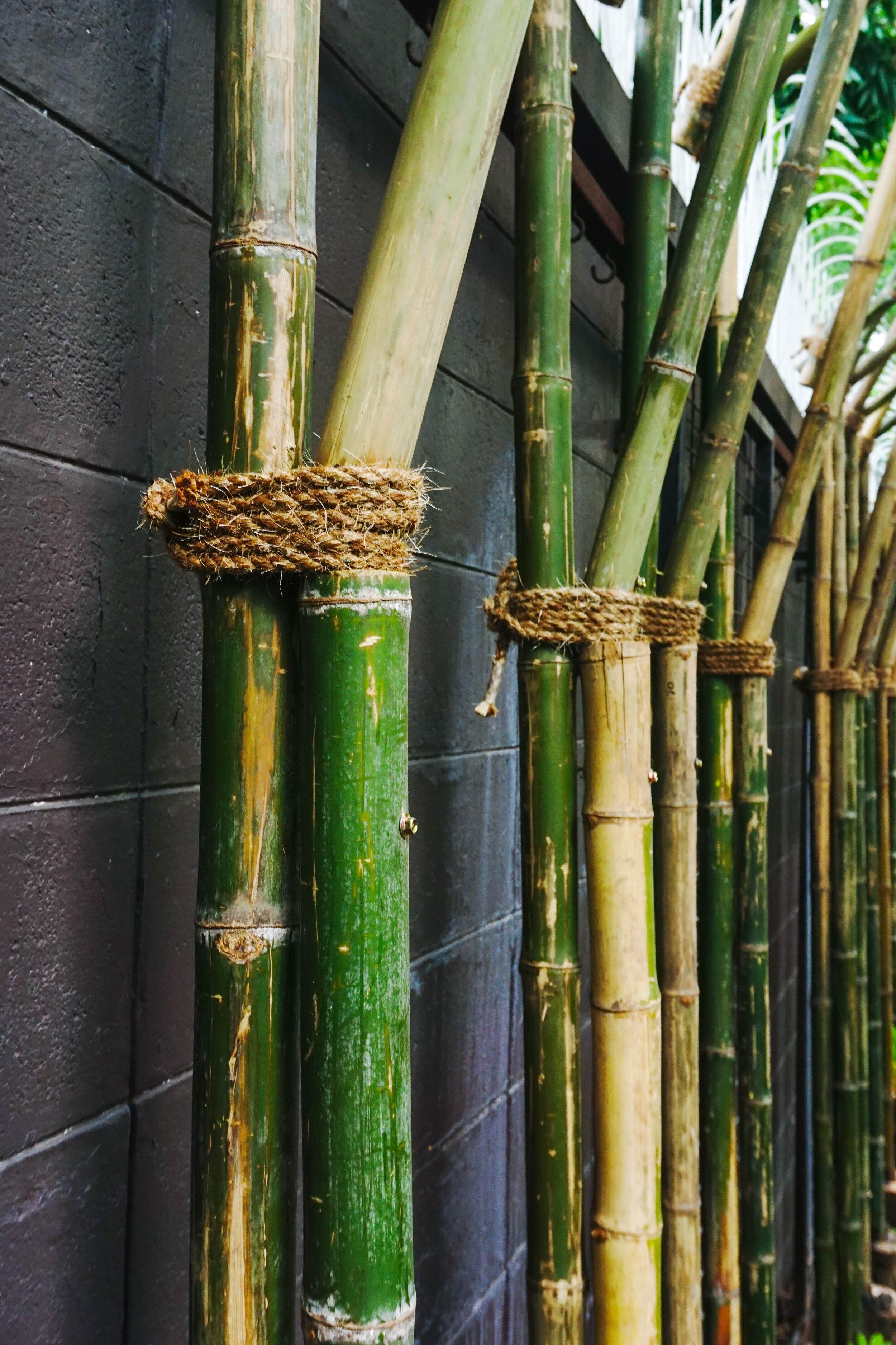 Bo.lan Edible Garden: ZONE H - The Fresh Air Tunnel built with bamboo