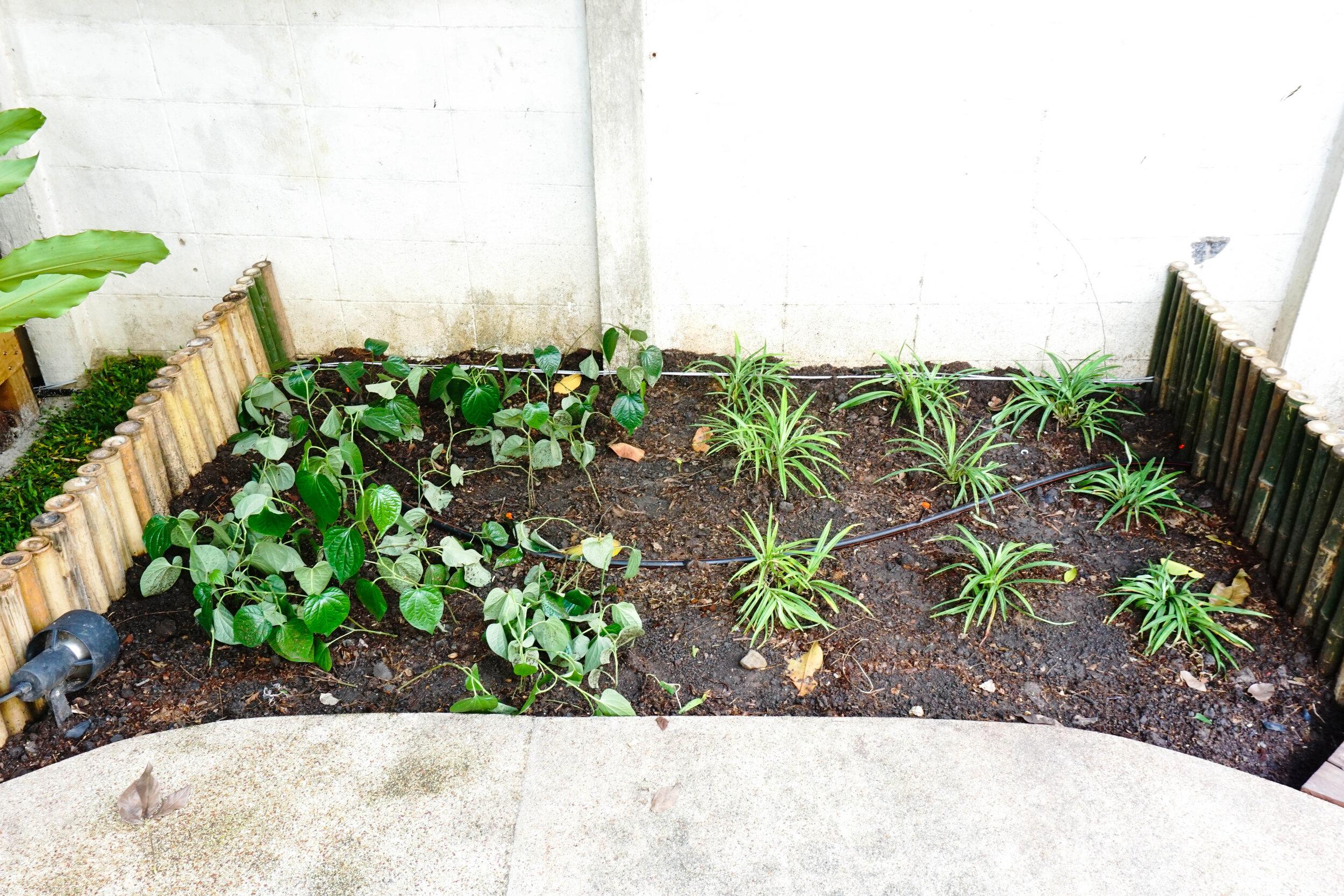 Bo.lan Edible Garden: Semi-managed garden in ZONE F - The Wood & Bees Garden