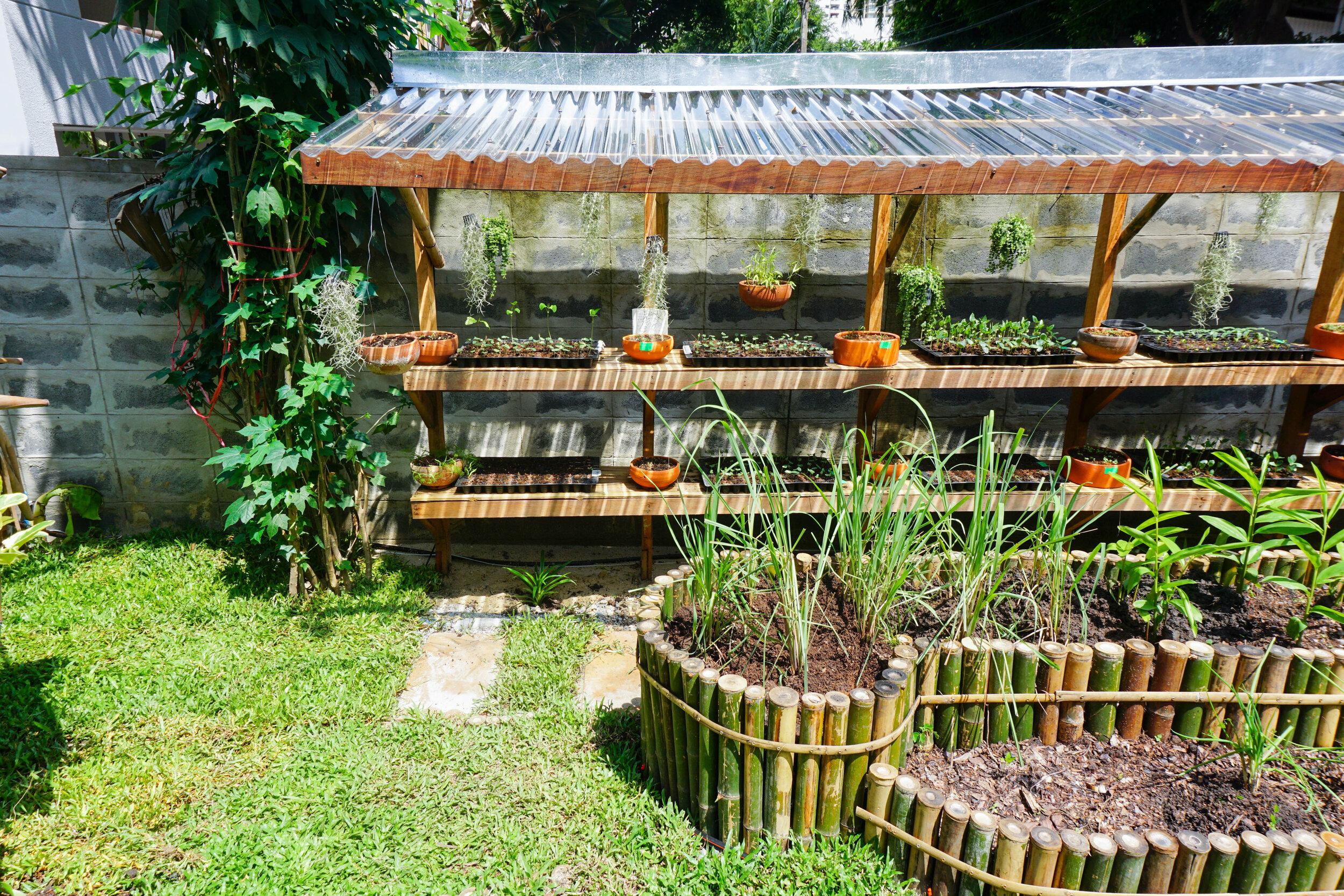 Openspace: Short term harvest plants & plants nursery at the organic garden at Bo.lan, Bangkok