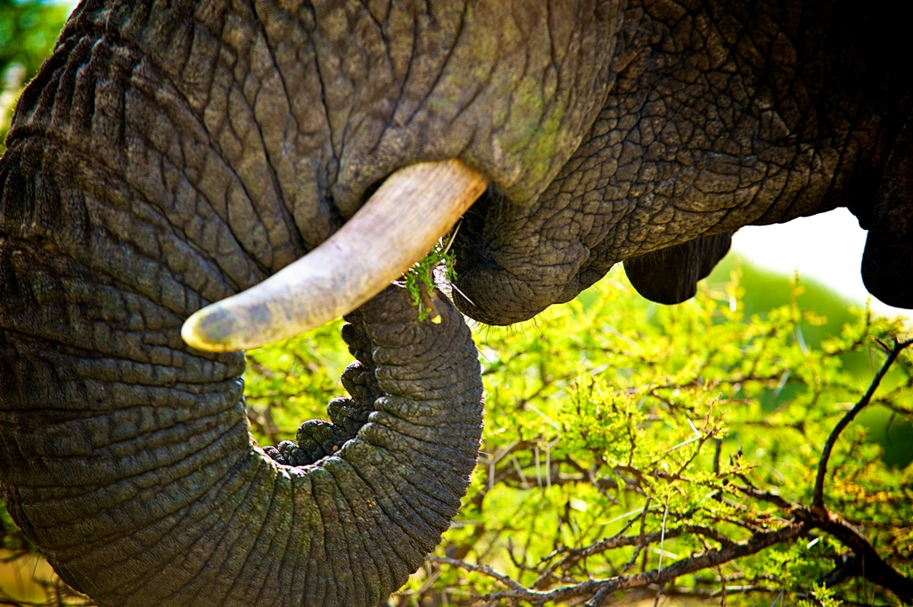 An elephant can eat up to 5% of it's own body weight in a day.