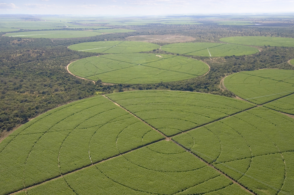 Centre Pivot irrigated cane