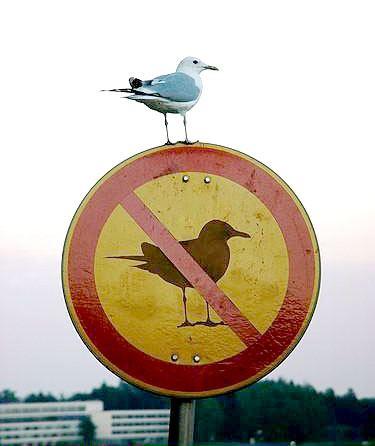 bird-oGbFlJb.jpg