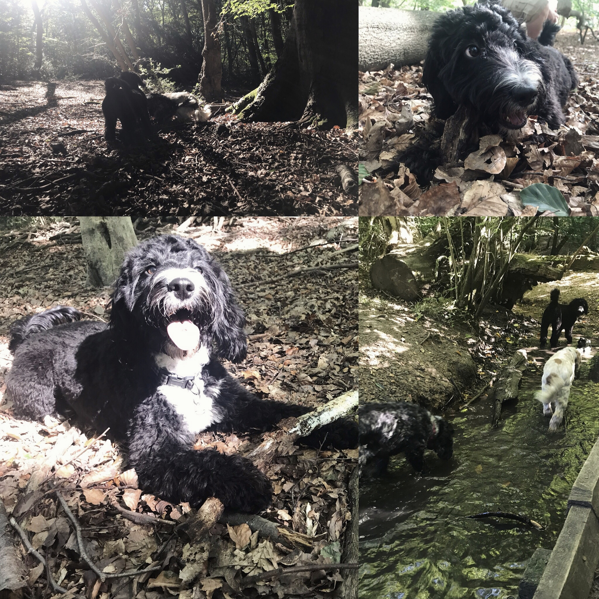 Into The Woods - Got a stick, got my friends, I'm happy as a pup in mud.
