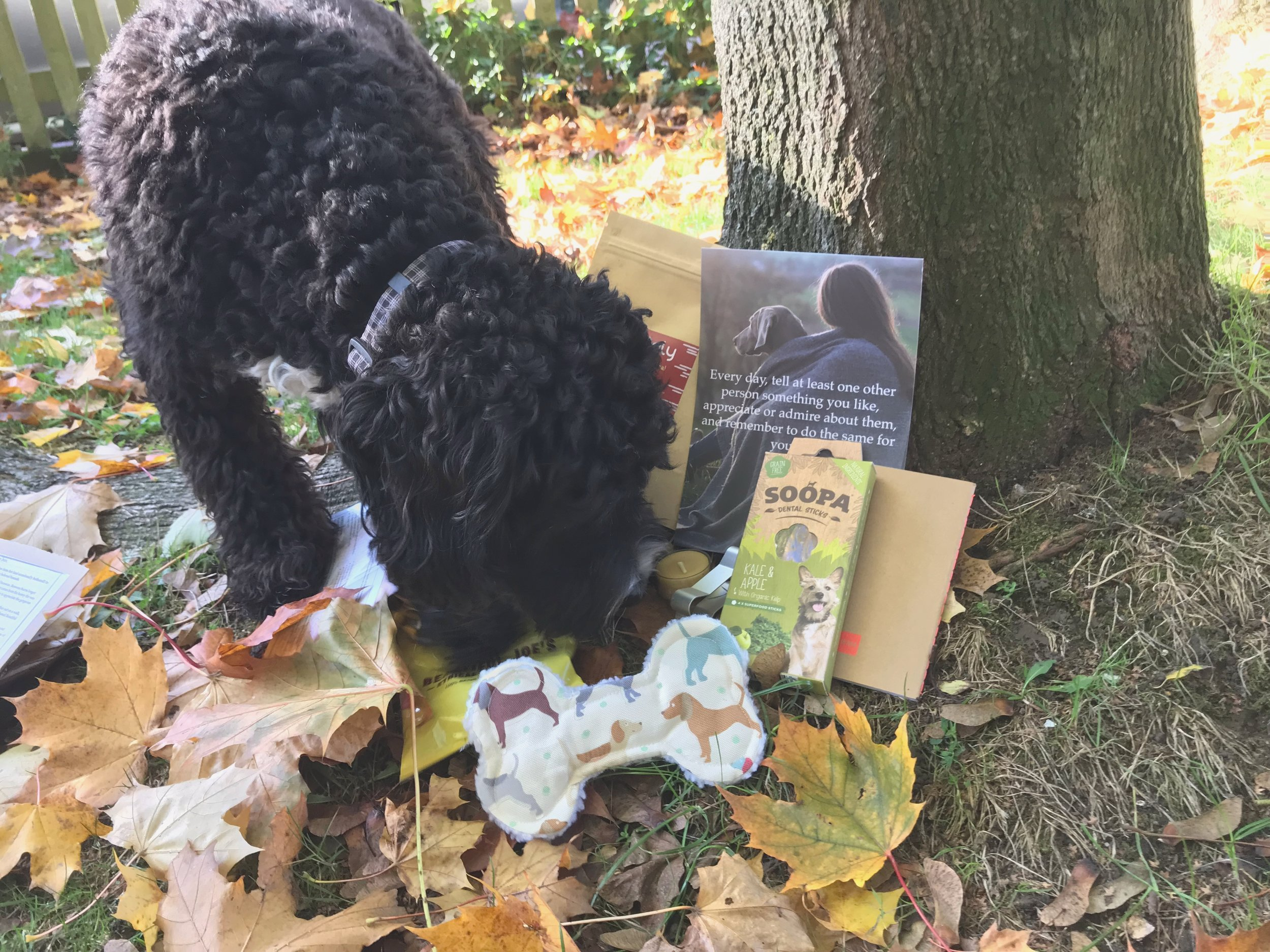 Bella ONE OF OUR AUtumn TEsterS - Bella picked a beautiful day to road test the Autumn box. ⭐️⭐️⭐️⭐️⭐️