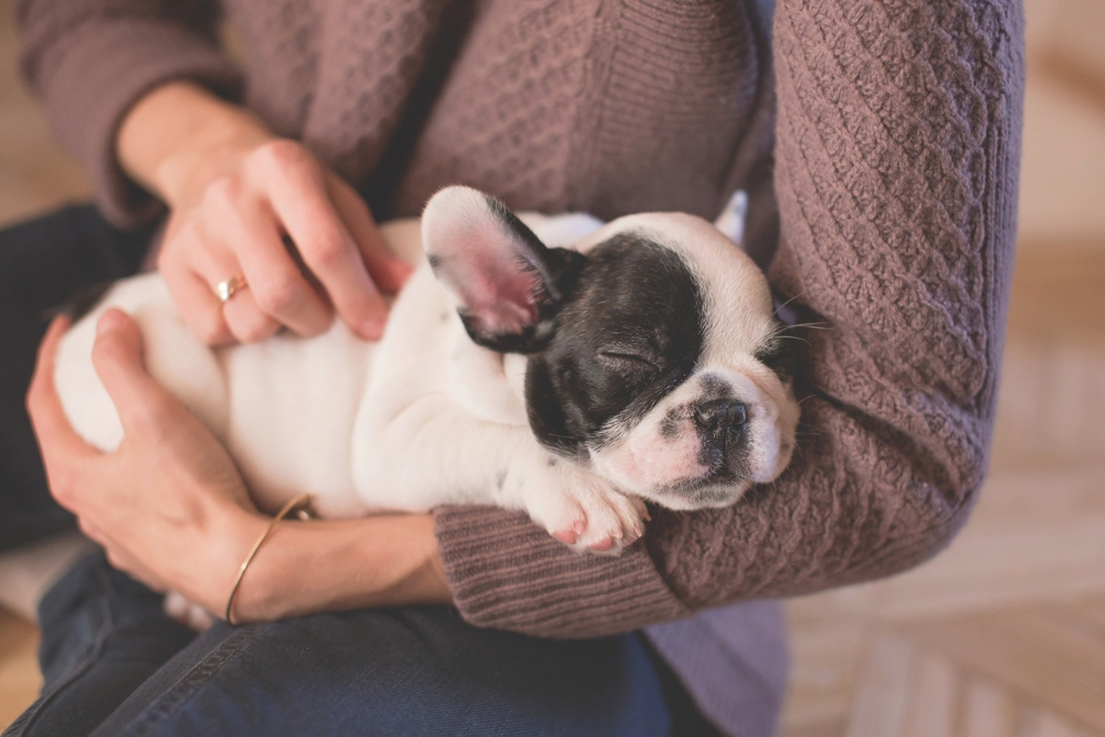 Classical Music proven to calm our four-legged friends - …also so has Reggae and Soft Rock, time to make a favourite playlist for your beloved companion.