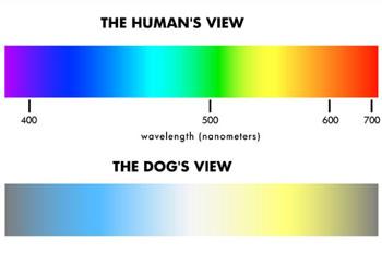 dog_vision.jpg