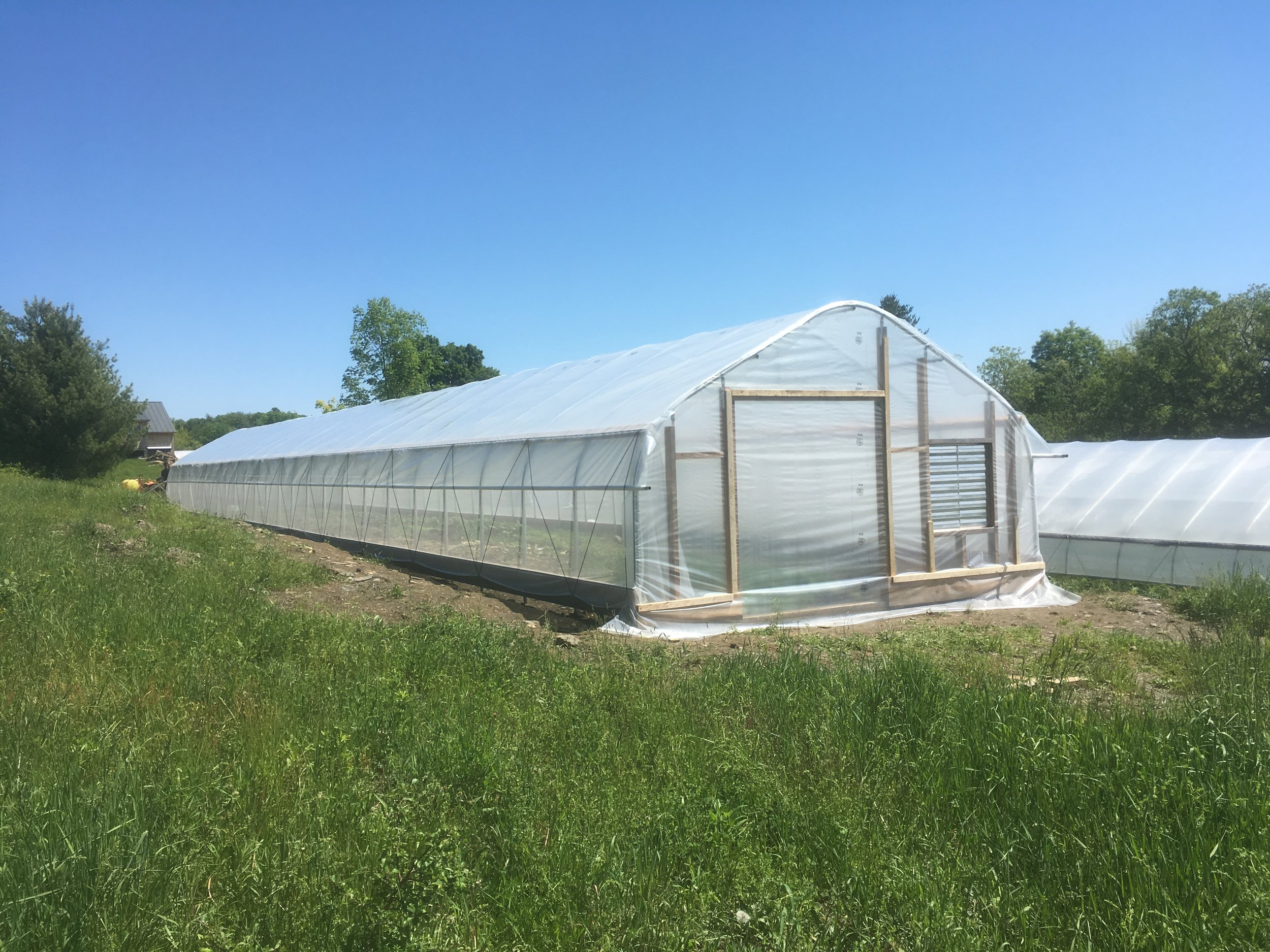 1000 Stone Farm Cucumber House