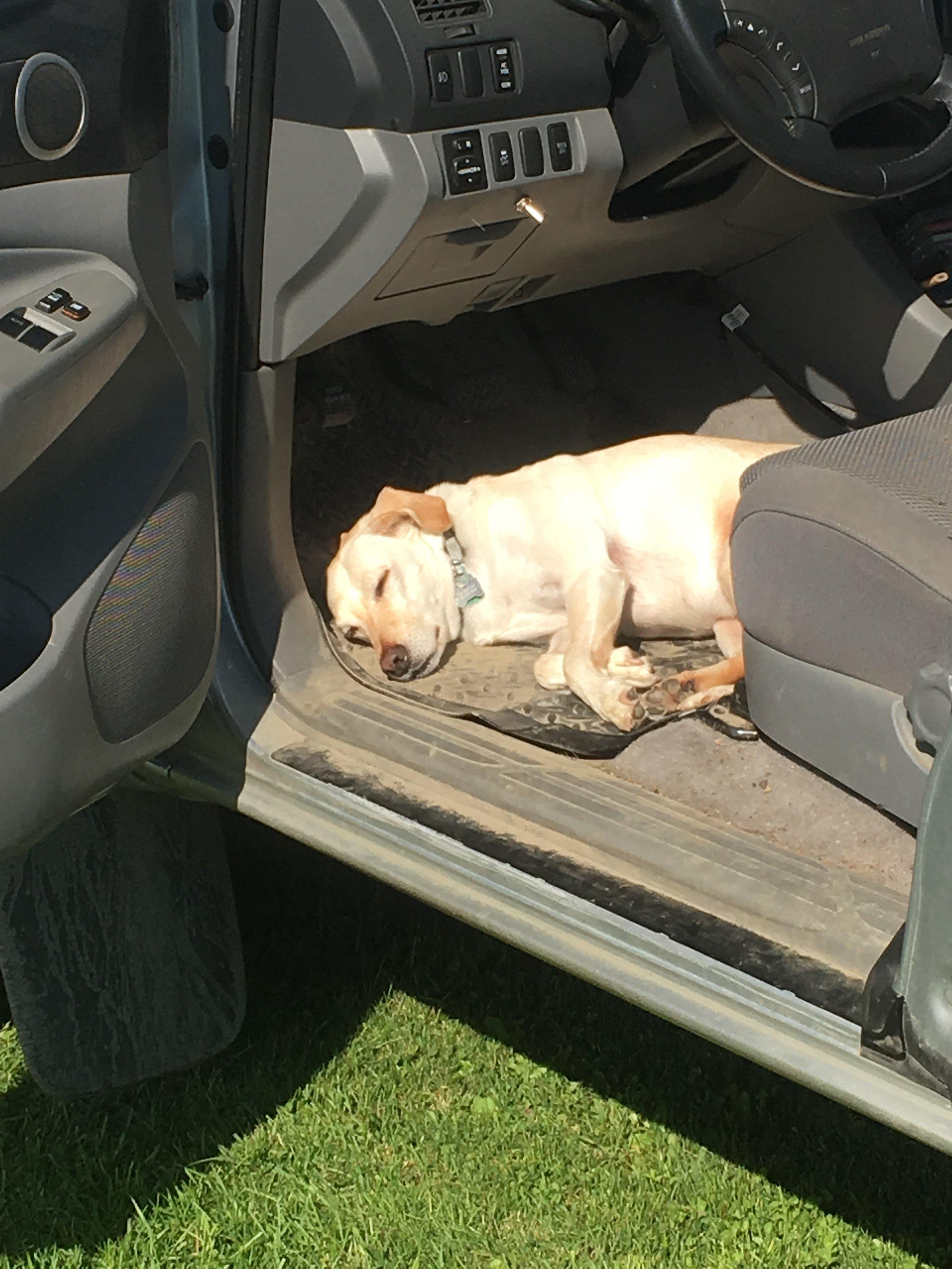 Work pup taking a break!