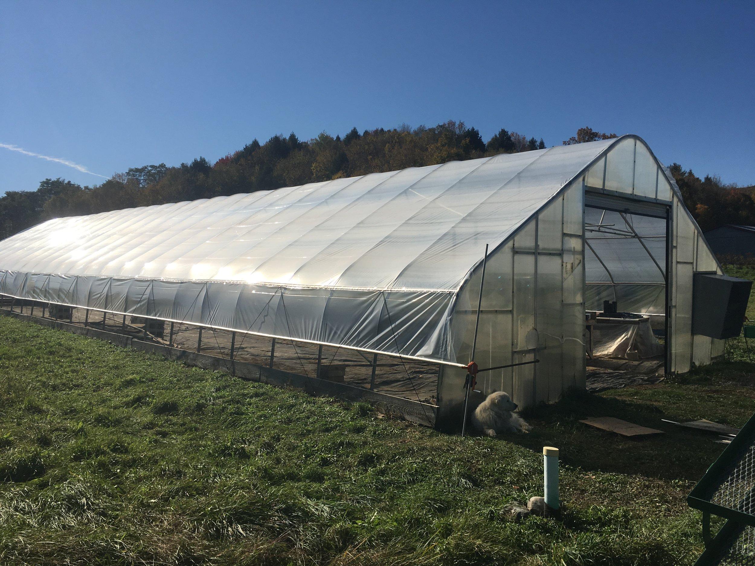 Rockville Market Farm - Hoophouse Triage