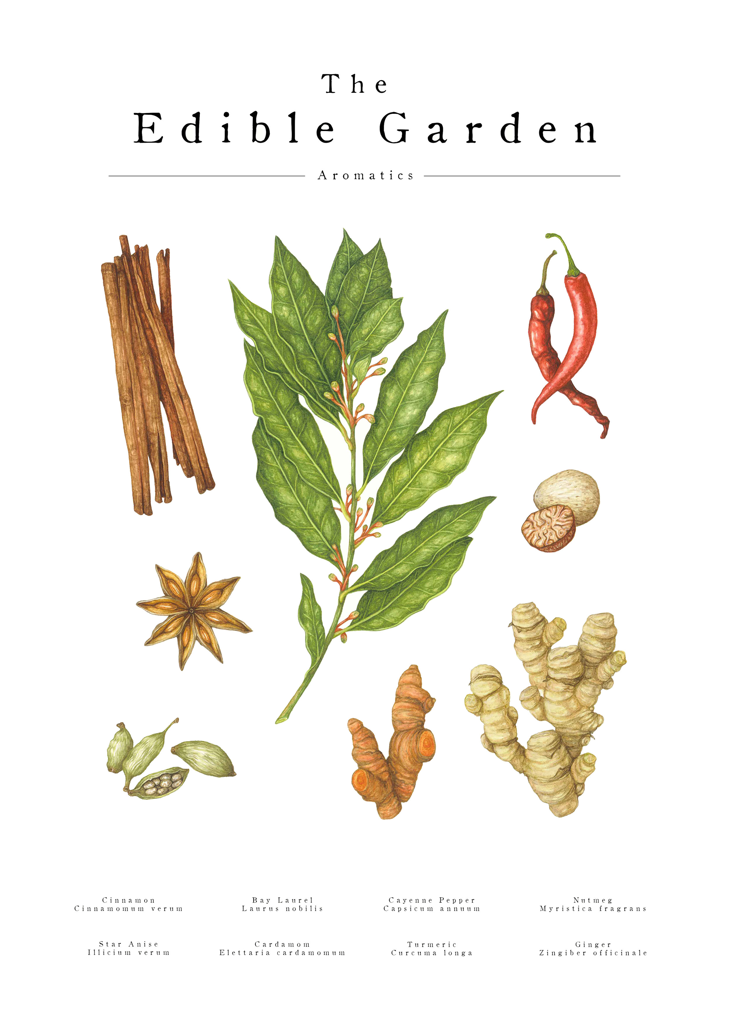 no.2 aromatics - Strong bold and full of flavour.